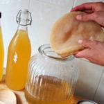 вырастить чайный гриб в домашних условиях