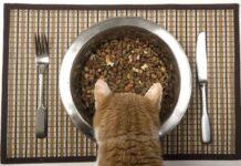 Подбираем корм для своей кошки