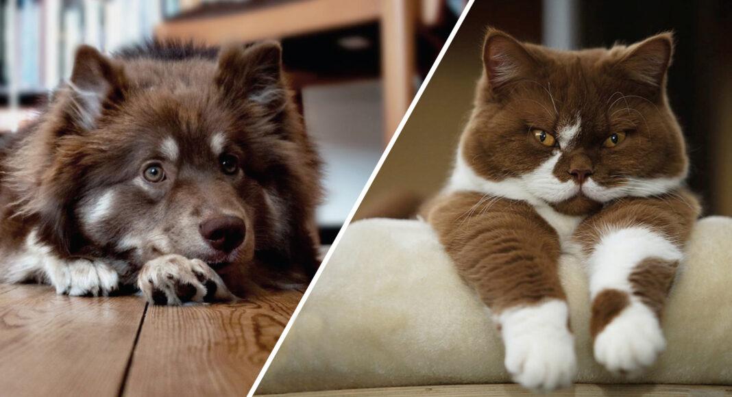 Какого питомца выбрать: кошку или собаку