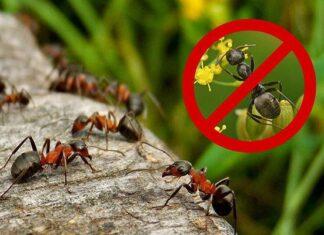 лучшие средства по борьбе с муравьями